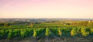 Lumire dans les vignes en France