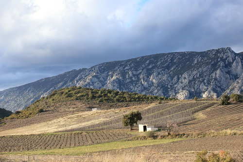 mediterranean vineyard and isolated cabin in Fenouilledes. Pyren