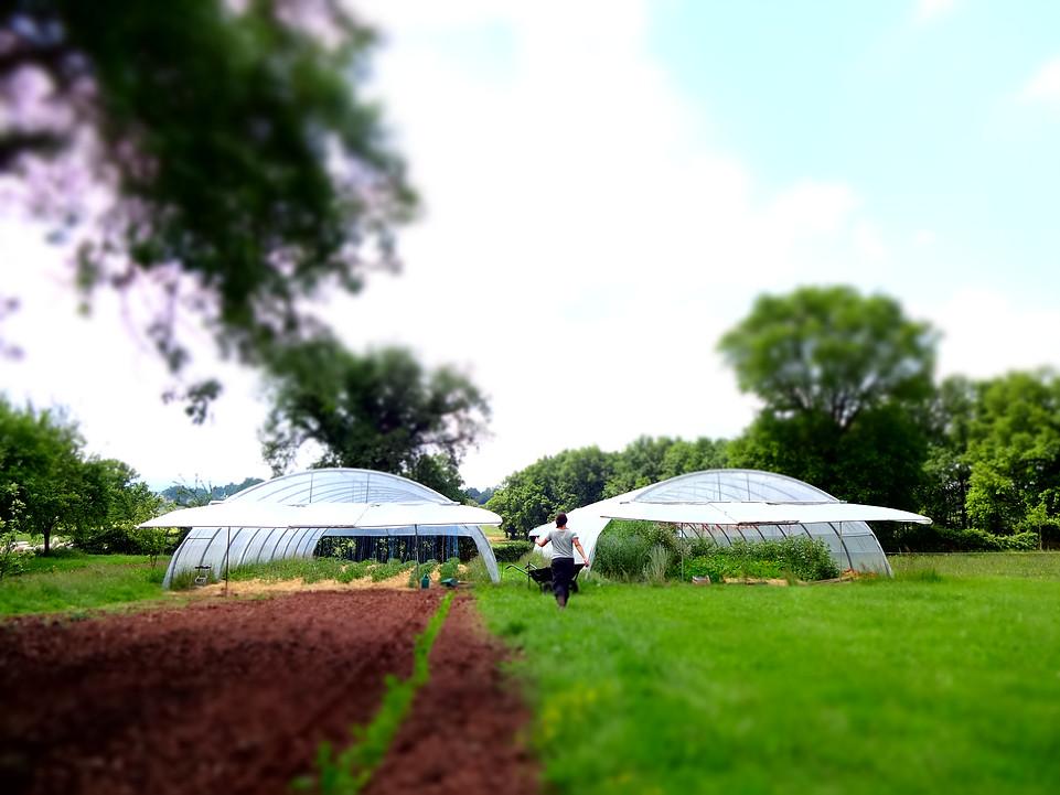 jardin_pots_danne nature et progrès